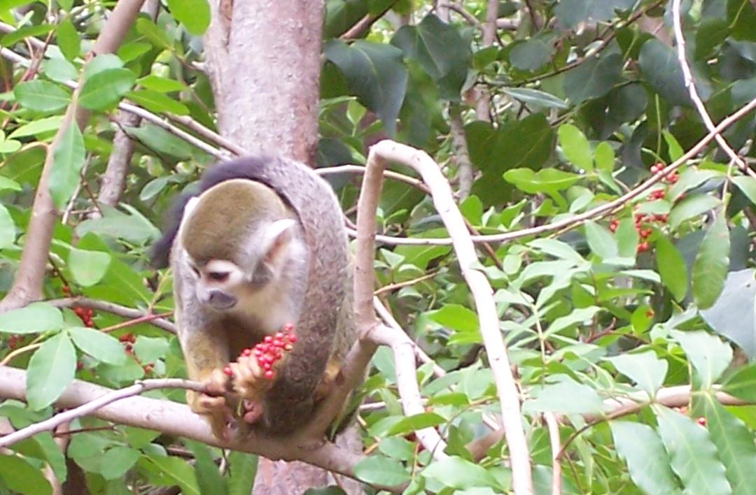 Thailand Monkey Festival