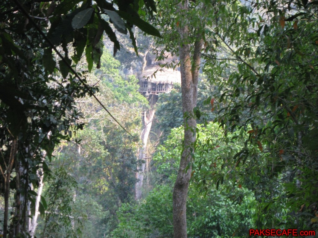 Gibbon Experience, Zip Lining and Tree Huts