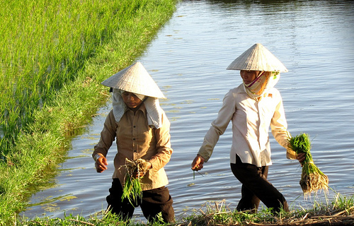 Vietnam and Organic Farming