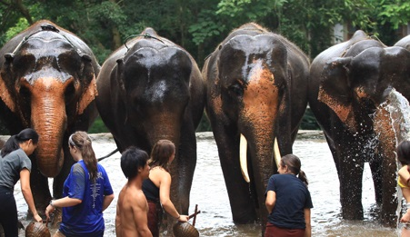 What to know about Patara Elephant Farm, Thailand